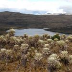 Colombie : cap sur le Parc National Naturel de Sumapaz
